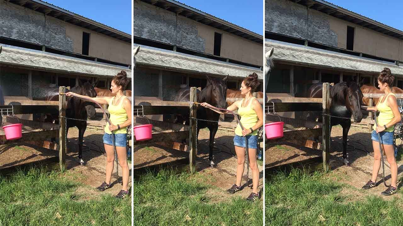 Tjejen försöker spola av hästarna men svalkande kallvatten, men det går inte riktigt enligt planen!