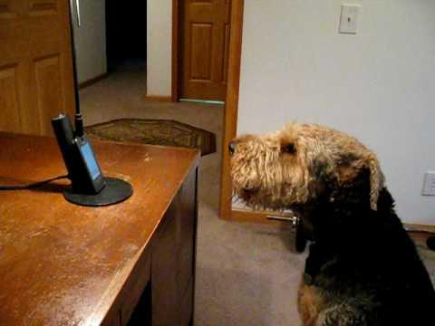Hunden saknar matte så otroligt mycket att han ringer upp henne – det går inte sluta skratta när hon svarar!