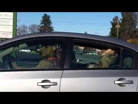 Se vad den otåliga hunden gör när husse tar för lång tid på sig i affären! – GAPSKRATT!