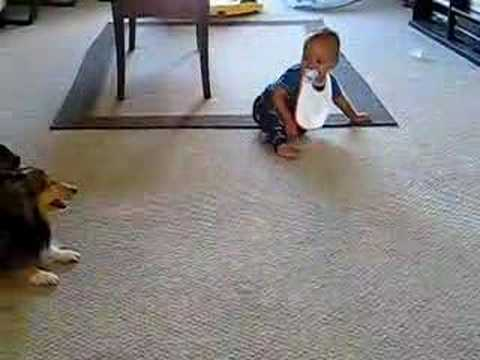 Ingen trodde att hunden gjorde detta mot bebisen. Därför tog man fram kameran och filmade!