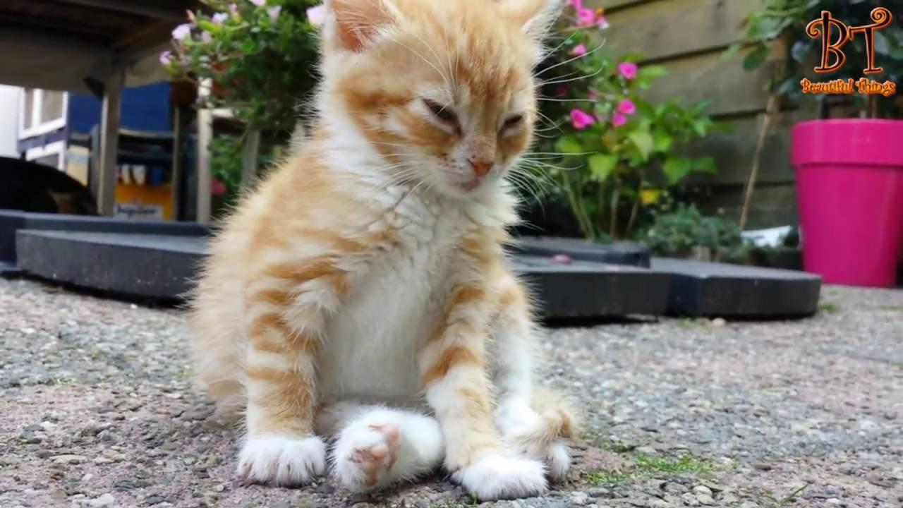 Katter och hundar som kämpar med att försöka hålla sig vakna. Sötvarning!