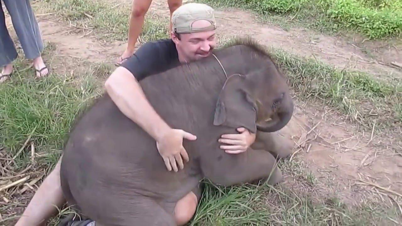 En lekfull elefant rullar runt och försöker gosa med en besökare!