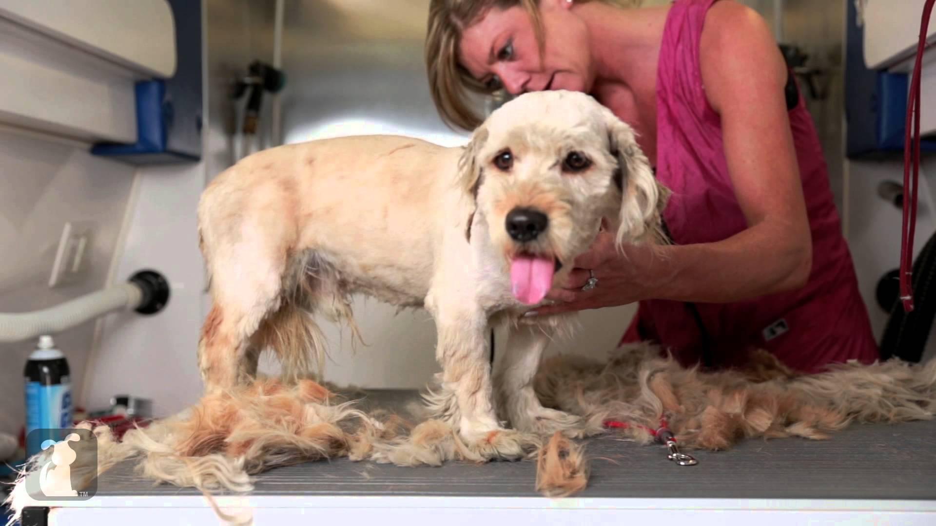 Hon rakar av håret på den här hemlösa hunden. Det vi får se då fick våra hjärtan att smälta