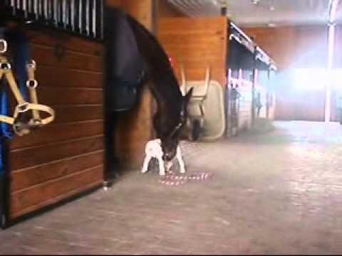 Hunden är väldigt nyfiken på hästen, det som händer när de möts är nästan otänkbart!