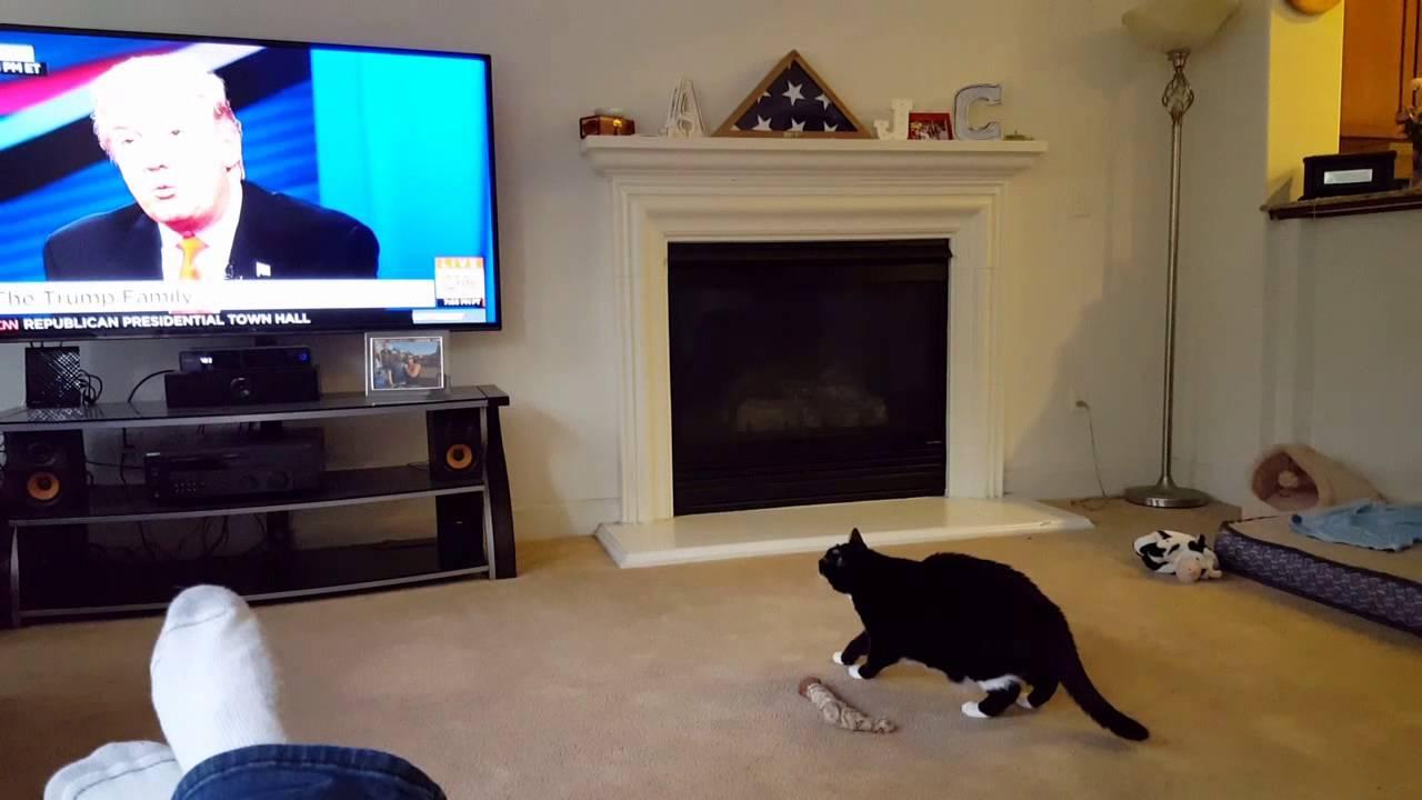 Kolla in kattens reaktion när han ser Donald Trump på tv