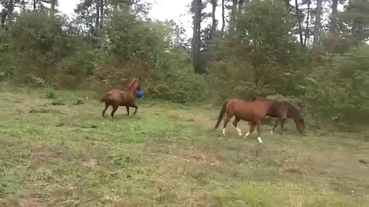 Ingen trodde på henne när hon berättade vad hennes häst brukade göra. Då åkte kameran fram!
