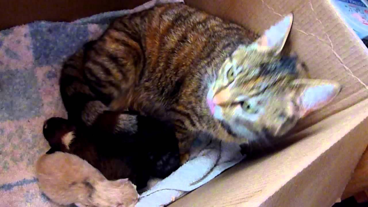 Matte lägger den nyfödda valpen intill katten. Hennes reaktion är underbar!