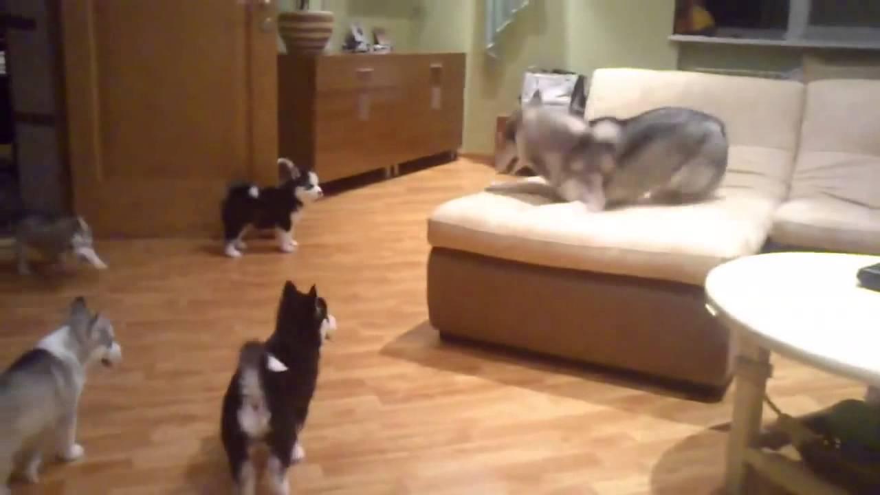 Valparna ser sin mamma ligga i soffan. Hur hon reagerar då är underbart. Vilken otrolig mamma!