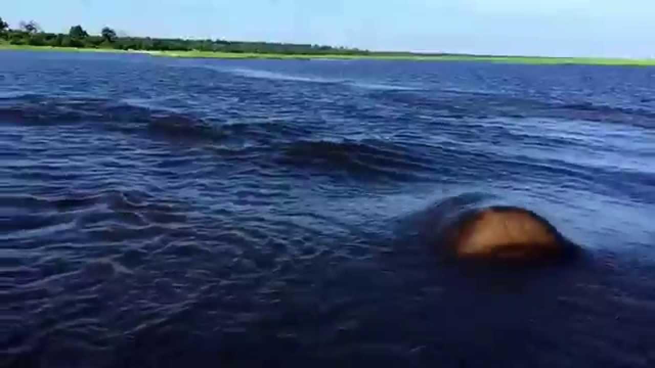 En turist fångar något enormt overkligt som kommer upp ur vattnet. Den hade inga fenor!