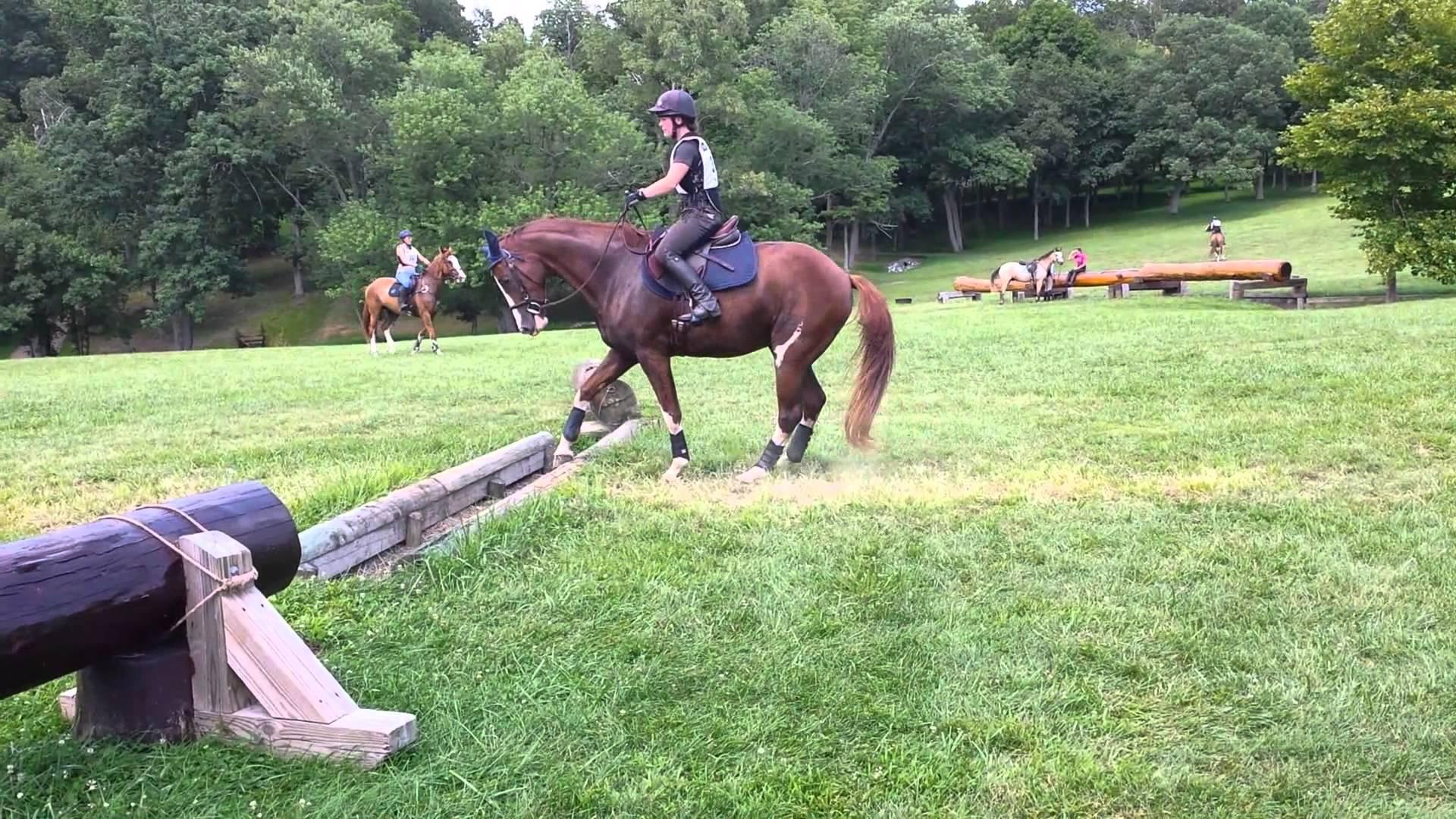 Hästen vägrar hoppa över hindret, sen plötsligt kommer den på en briljant lösning!