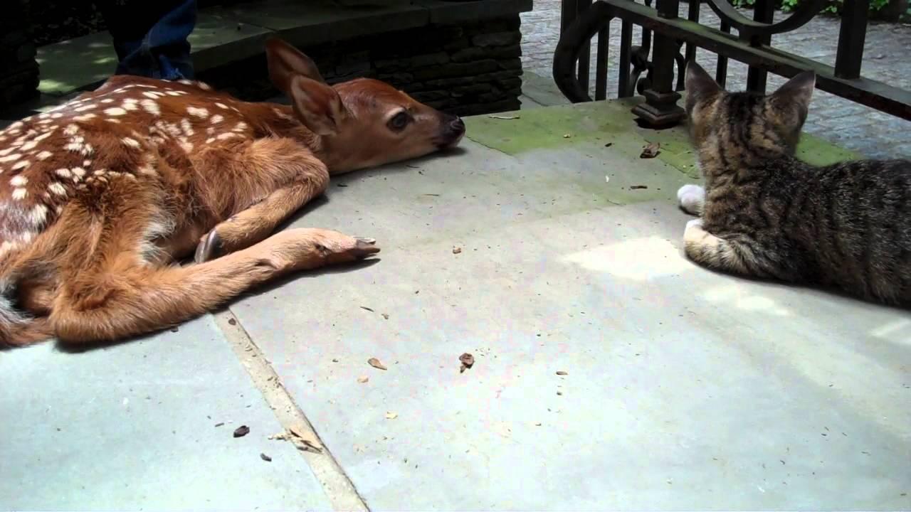 Kattunge hittar en oväntad gäst på verandan. Se nu vad som händer!