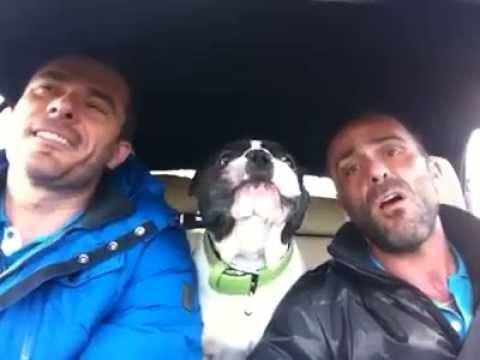 Två killar sjunger sin favoritlåt i bilen. Vad hunden gör då fick oss att gapskratta!