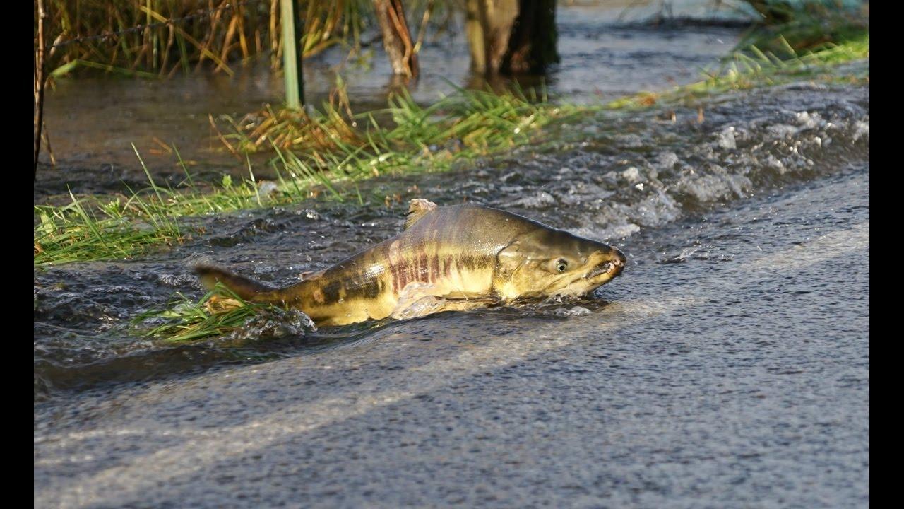 En konstig varelse tar sig över gatan. När du ser vad kommer du att häpna!