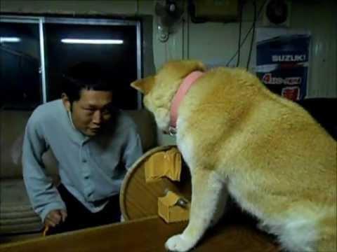 Mannen ber om att få en puss av sin hund. Det som sker då fick oss att gapskratta!