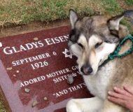 Hunden har förlorat en familjemedlem, men vad den gör vid graven har fascinerat miljontals!