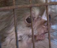 Den lilla hunden blev tillfångatagen i en gammal och lerig bur. Men då hände detta!