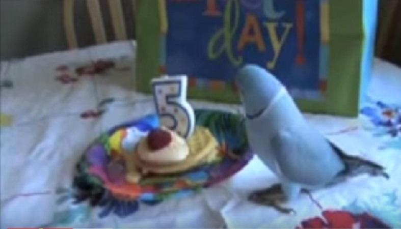 födelsedag se Det är papegojans födelsedag! Se vad han får i present! Det här är  födelsedag se