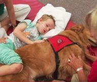Hoppet verkade helt ute för den trafikskadade pojken, men hunden förändrar allt!