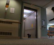 Varje dag tar hunden hissen upp till 3:e våningen, anledning? Koll in detta!