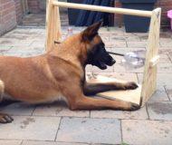 Den här leksaken kan underhålla en hund i timmar. Smart!