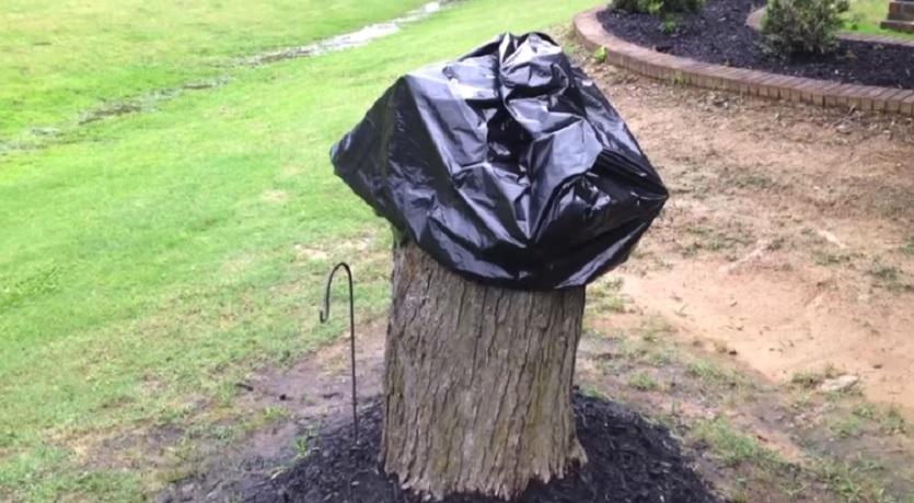 ta ner träd