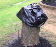Mimis man högg ner ett träd. När hon tar bort sopsäcken 2 veckor senare har stubben förvandlats till ett konstverk!