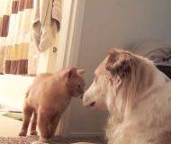 En liten tår föll när jag såg den hemlösa kattens första möte med familjens hunden.