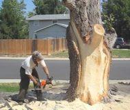 Det ser ut som han kommer såga ner trädet, men när han är färdig blir grannarna gröna av avundsjuka!