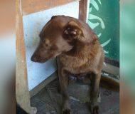 Deprimerad hund bor ensam på ett djurhem i över 2 år. Men sen en dag känner hon en bekant lukt!