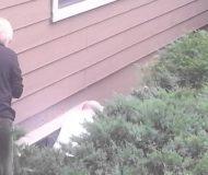 Han böjer sig ner i buskaget efter att ha hört ett konstigt ljud. Det han upptäcker är helt oemotståndligt!