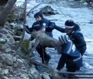 De räddade en frusen varg från en iskall flod. Nästa sak som händer fick mig att lipa som ett barn!