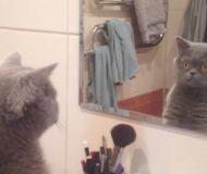 Katten får syn på sin egen spegelbild och reagerar på det sötaste sättet!