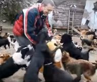 Han klarade inte av att se övergivna och hemlösa hundar på gatan – det han gjorde? Räddade 450 stycken!