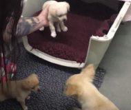 Hundmamman får sitt livs överraskning när hon äntligen fick träffa sina valpar igen!