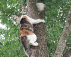 Se det magiska ögonblicket när den rädda kattungen får hjälp. Fantastiskt!
