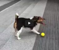 Husse vägrar att kasta bollen – kolla in vad hunden hittar på då! SMART!