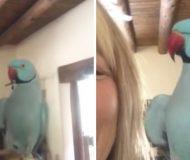 Har du sett vad den här papegojan kan göra? Detta är helt otroligt!