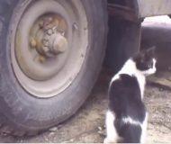 Katten är på jakt, men musens geniala gömställe lurar den fullständigt – kolla in slutet!
