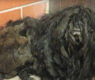 Den hemlösa hunden får sin första klippning på flera år – förvandlingen är helt otrolig!