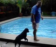 Mannen står vid poolkanten, men kolla in vad hunden hittar på då. Gapskratt!