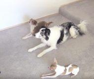 Matte rör sig på ett mycket speciellt sätt. Håll koll på vad hundarna gör då!