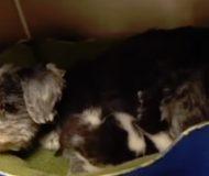 Hunden har lagt en vakande tass över sin nya bebis. När du ser vem kommer ditt hjärta att smälta!