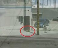 Hon råkade se en hemlös hund på google maps. Det som händer sen fick mitt hjärta att smälta!