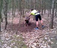 Bocken hade fastnat och var nära att dö. Men då kom joggaren till undsättning. Fantastiskt!