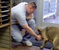 Bortsprungen hund har inte träffat sin husse på 7 månader. Se det gripande ögonblicket när de återförenas!