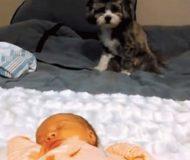 Matte filmar i smyg när hunden får träffa familjens senaste tillskott. Resultatet fick mig att tappa hakan!