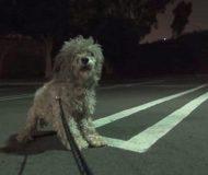 Den livrädda hunden bor ensam på sjukhusparkeringen – men det som händer när hon räddas gjorde mig tårögda!