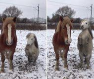 Hästarna står och chillar i hagen men kolla in vad den högra gör när musiken startar!