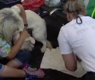 Hunden börjar bete sig konstigt på flygplatsen, men det som händer sen fick alla resenärer att jubla!