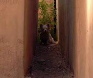 Den hemlösa hunden blev lämnad av sin familj, men plötsligt en dag tar historien en oväntad vändning!